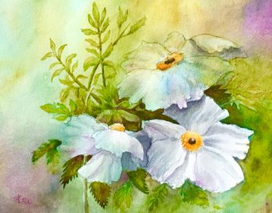 Matilija Poppies by Joseph Apablaza